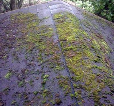 Euréka Travaux - Demousage toiture